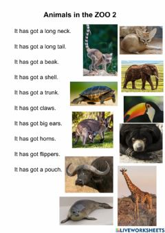 Interactive worksheet Animals in the zoo 2