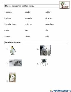 Interactive worksheet Animals2nd1.3