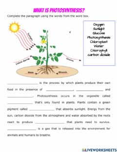 Interactive worksheet What is Photosynthesis