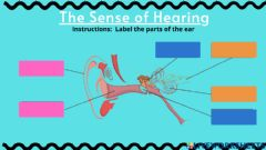 Interactive worksheet The Sense of Hearing GSD 3