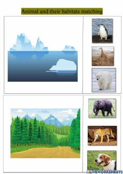 Interactive worksheet Animal and their habitat