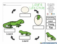 Interactive worksheet Lizard Life Cycle