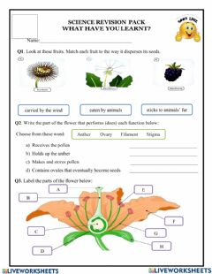 Interactive worksheet Plants review