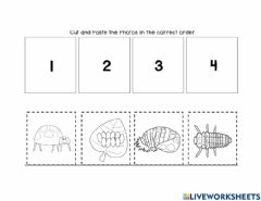 Interactive worksheet Ladybug Life Cycle