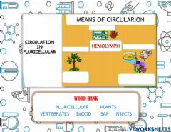 Interactive worksheet Means of circulation