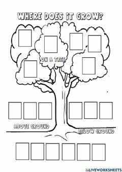 Interactive worksheet Where does it grow