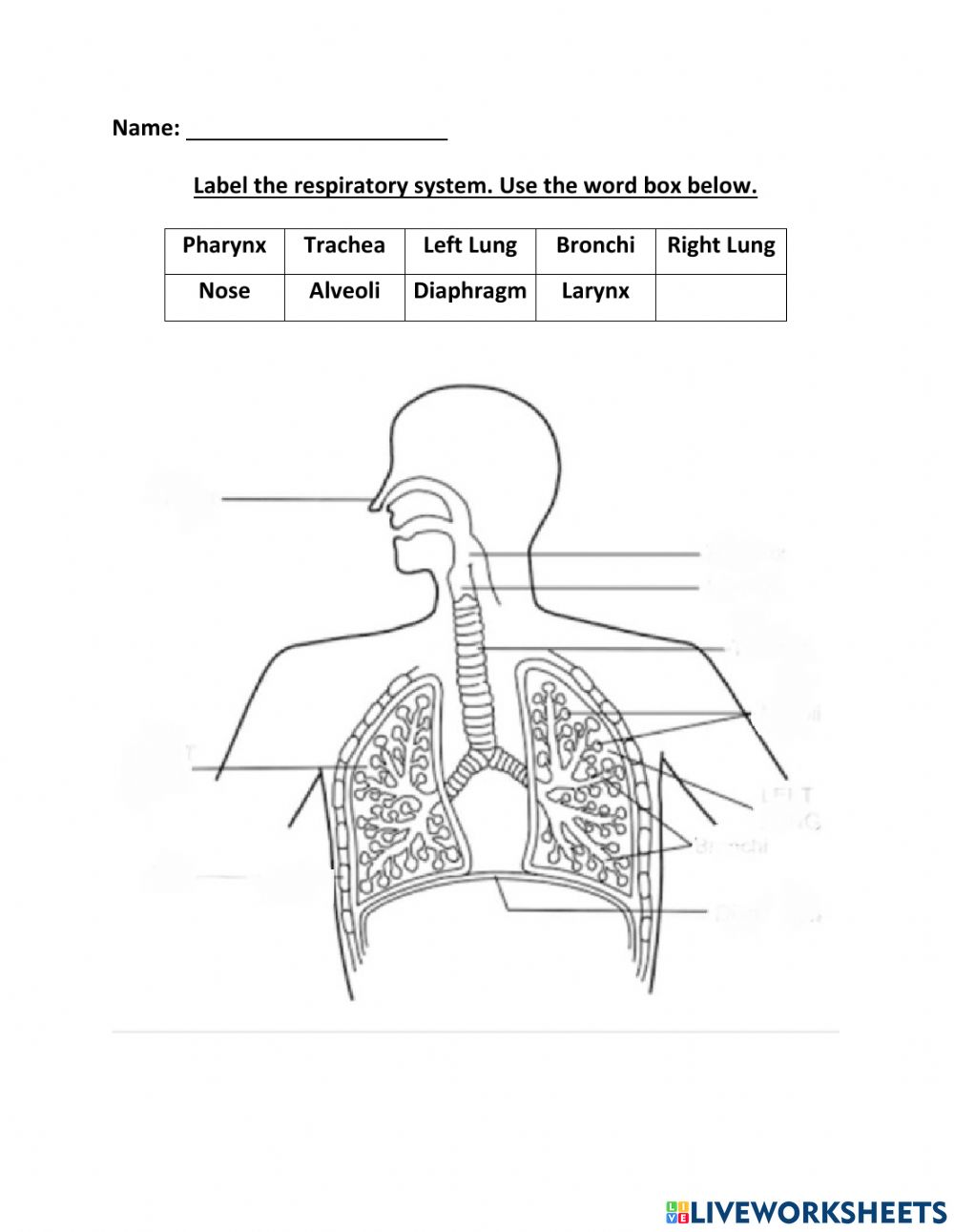 Label the Respiratory System interactive worksheet Throughout The Respiratory System Worksheet