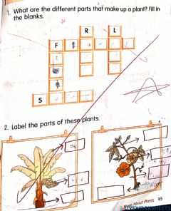 Interactive worksheet All about plants