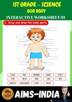 Interactive worksheet 1st-science-ps01-our body