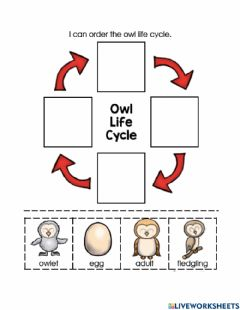 Interactive worksheet Owl Life Cycle