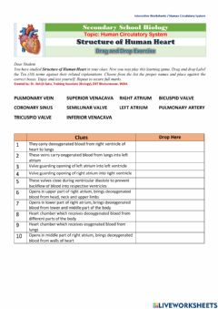 Interactive worksheet Structure of Human Heart