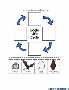 Interactive worksheet Eagle Life Cycle