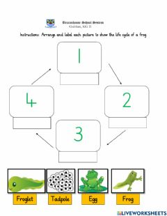 Interactive worksheet Life cycle of a frog