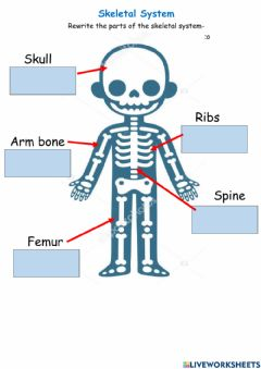 Ficha interactiva Parts of the skeletal system