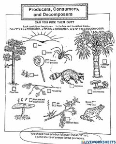Interactive worksheet Producers, consumers, decomposers