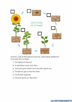 Ficha interactiva Life cycle of a plant