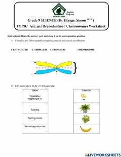 Interactive worksheet Asexual Reproduction