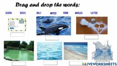 Interactive worksheet Vocabulary study about the book Dear Mr Blueberry