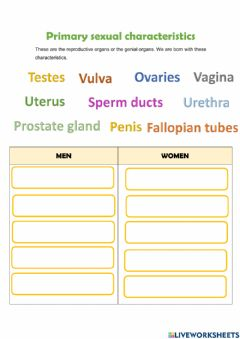 Interactive worksheet Primary sexual characteristics