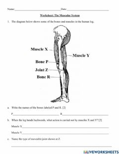Interactive worksheet How Muscles Work