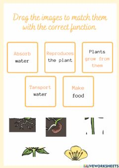 Interactive worksheet Functions of the parts of the plants
