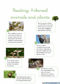Interactive worksheet Reading: Arboreal animals and plants
