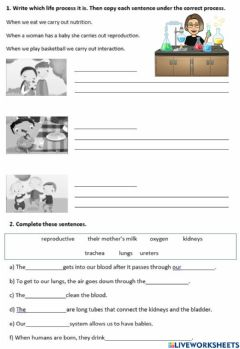 Interactive worksheet Science REVISION
