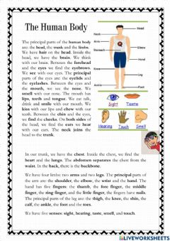 Ficha interactiva Reading about the human body