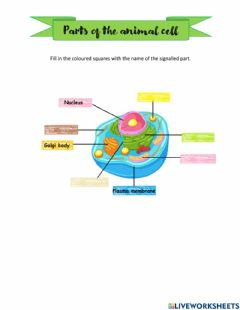 Interactive worksheet Parts of the cell