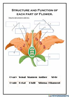 Interactive worksheet Structure of Flower
