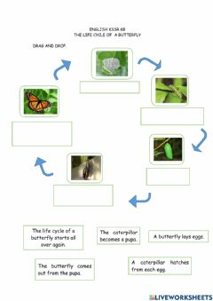 Ficha interactiva The Life Cycle of a Butterfly