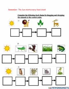 Interactive worksheet Food Chain with Sun