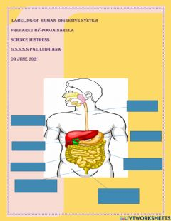 Interactive worksheet Labeling of human digestive system