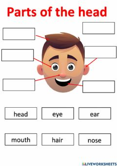 Interactive worksheet Parts of the head