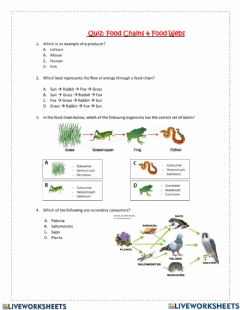 Interactive worksheet Quiz food chains and food webs
