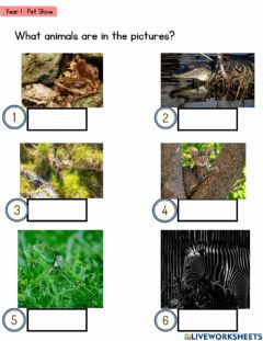 Interactive worksheet Year 1-pet show (camouflage)