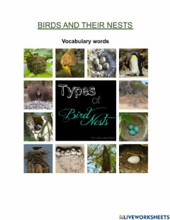 Interactive worksheet Birds and their nests
