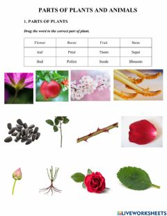 Interactive worksheet Parts of plant and parts of animal