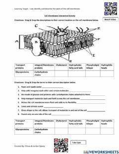 Interactive worksheet Cell Membrane Interactive Activity