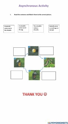 Interactive worksheet Lifecycle of a Butterfly