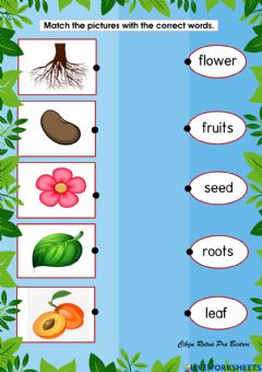 Interactive worksheet Part of plant.
