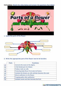 Ficha interactiva Parts of a flower and their functions