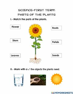 Interactive worksheet Science first term- parts of the plants