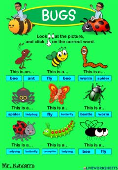 Interactive worksheet Bugs (Look at the picture and click on the correct word)