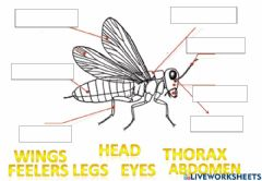 Interactive worksheet Parts of insects