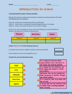 Interactive worksheet Sexually Transmitted Infections (STIs)