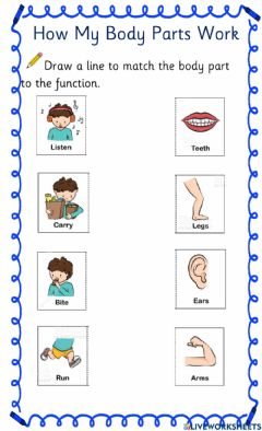 Interactive worksheet Body Parts & Function