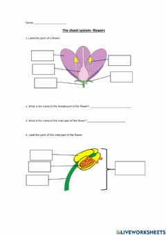 Interactive worksheet The shoot system - flower (no checking answers)