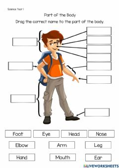 Interactive worksheet Part of the body