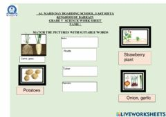 Interactive worksheet Plants can make new plants